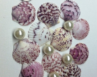 One Dozen Pink Scallop Shells - Small Pink Scallop Shells - Scallop Shells from the Gulf of Mexico - Seashells for Wedding Decor