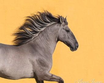 The Sorraia Stallion Runs - Wild Horse Fine Art Print - Sorriaia - Portugal - Fine Art Print