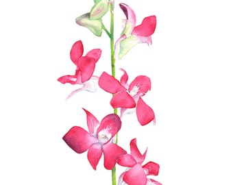 Singapore Orchid watercolour painting, SO10916, Singapore orchid watercolor print, botanical wall art, 5 by 7 size, minimal wall art, pink