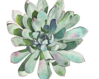 Succulent Original watercolour painting - Original watercolor Painting of a succulent - A3 size - S116 - Botanical art
