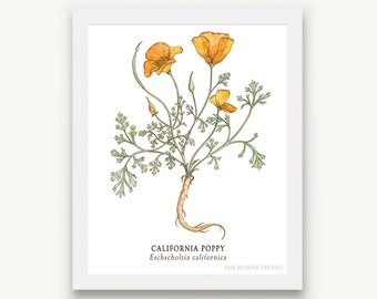 Botanical California Poppy Print - Unmatted
