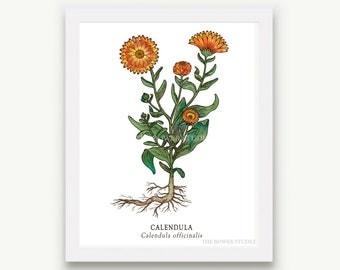 Botanical Calendula Print - Unmatted