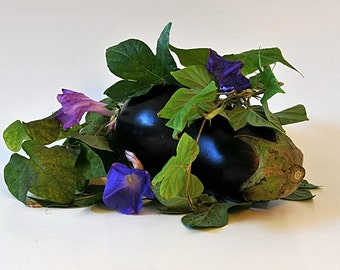 A Study Of Purples Morning Glories Eggplant Photo Kitchen Decor Wall Decor