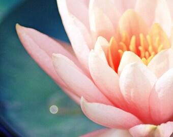 Waterlily Photography, Pink Flower Wall Art, Shabby Chic Art. Flower Photography, flower print, floral photo, botanical Art, 11x14