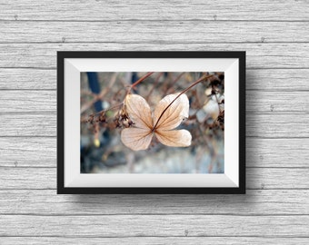 Autumn photography, fall nature photography, botanical art print, minimalist wall art, brown flower, living room decor, gifts under 25