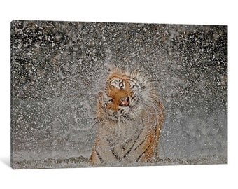 iCanvas Nat Geo Recognition? The Explosion! Gallery Wrapped Canvas Art Print by Ashley Vincent