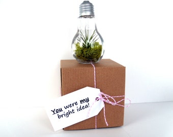 Valentine's Day Light Bulb Air Plant Terrarium Packaged in Kraft Gift Box With Your Choice of Valentine Tag