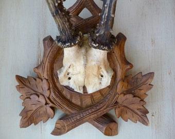 Vintage Wall Antlers Real Antlers Hunting Trophy Mounted Roe Deer Antlers Cabin Decor