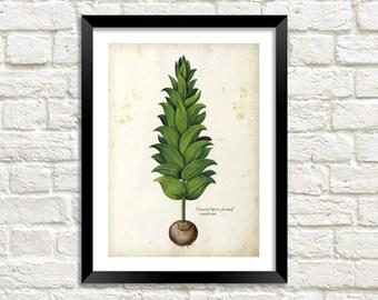 PLANT BULB PRINT: Vintage Garden Art Illustration Wall Hanging (A4 / A3 Size)