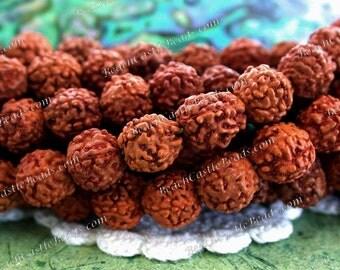 7 to 8mm Rudraksha Seeds, 108 Pieces Rudraksha Beads, Prayer beads, NAT-067-108