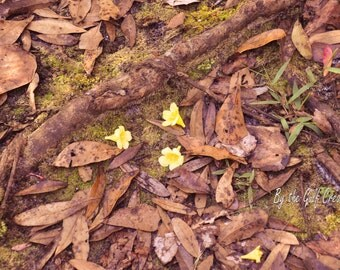 Rustic Flowers, Nature Photography, Fine Art Photography, Glossy, 8x10,