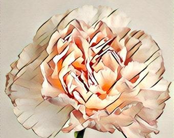 Carnation - Transverse Line Style