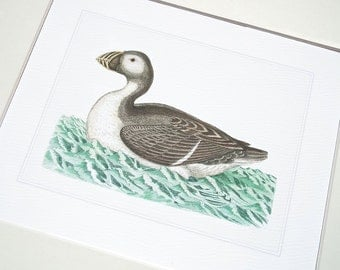 Bird Print 3 of Sea Bird Sea Puffin on Blue Green Water Archival Print on Watercolor Paper