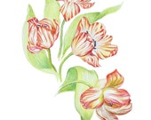 LIMITED EDITION of a 4 Tulip art print of pencil drawing, Elegant Compositional Print of 4 Beautifully Rendered Tulips, Tulip Art, Tulips
