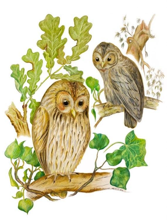 LIMITED EDITION Brown Owls, Tawny Owls, Woodland Owls, Woodland Owl, Bird Art, Owl in Tree, Nature Owl symbol of Wisdom, Harry Potter Bird
