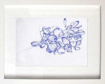 Orchids in Blue II
