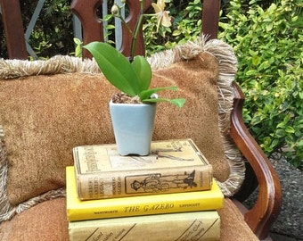 Vintage books, yellow, green and gold collection, Magnificent Obsession, Herbert Carters Legacy and The Gazebo, library decor, staging