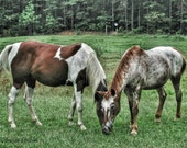 Digital Download Photography Two Horses in the Pasture Photograph Instant Download
