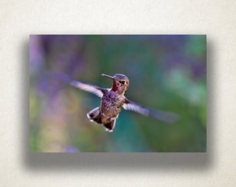 Hummingbird Canvas Art, Bird Wall Art, Animal Canvas Print, Close Up Wall Art, Photograph, Canvas Print, Home Art, Wall Art Canvas