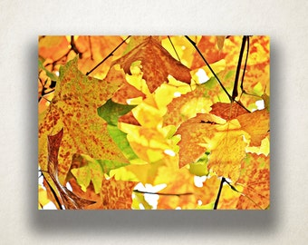 Autumn Leaves Canvas Art, Foliage Wall Art, Nature Canvas Print, Wilderness Wall Art, Photograph, Canvas Print, Home Art, Wall Art Canvas