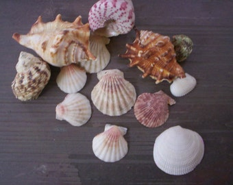 Lot of sea shell/Lot of mixed ocean shell/Lots of beach sea/Vintage mixed shells/Craft supply/Folk art supply/beach treasure/Natural decor