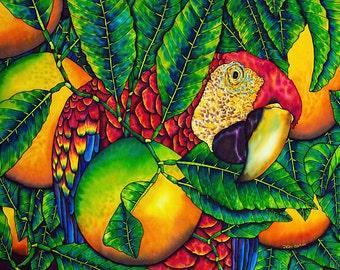 Macaw & Oranges