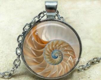 Chambered nautilus art pendant, chambered nautilus jewelry, shell pendant, spiral pendant, shell spiral, nautilus necklace, Pendant #AN151P
