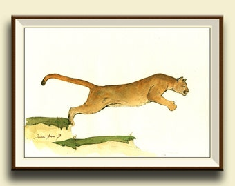 Cougar, Puma, Mountain Lion - Zoo animals 010