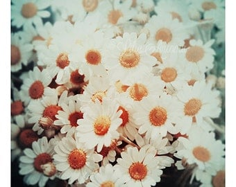 Floral Photography White Camomile Fine art photography Shabby Cottage Chic wall decor Summer Nature photography Ivory and Orange Color print