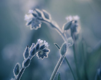 Ethereal Blue Photograph, Dreamy Nature Picture,  Vertical Wall Art Home Decor, Monochrome Photography, Botanical Wild Nature Photo Print