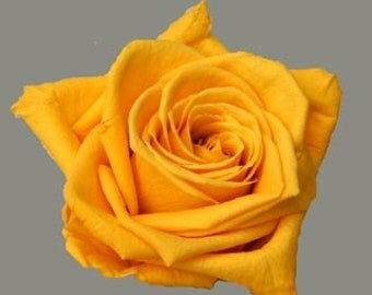 Preserved*Golden Yellow Roses, Preserved  Roses, Roses for Bouquet, Prom Roses, Preserved Rose Bouquet  Simply Beautiful !