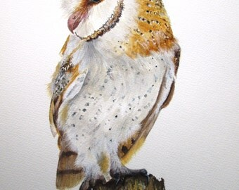 ORIGINAL watercolour painting of a Barn Owl by Josephine Bell