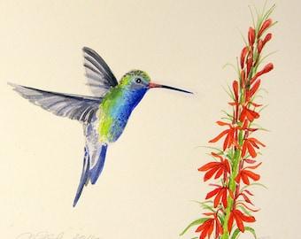 Hummingbird original watercolor bird paintings hummingbird botanical small paintings
