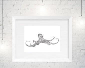 Giclée Octopus illustration, under the sea, sealife artwork, Octopus art, limited edition illustration, interior styling, 2017 styling