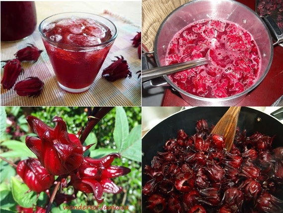 FLOWERS,Jamaican Sorrel - ,Make Traditional Caribbean Christmas ...