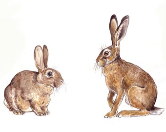 Rabbit and the Hare