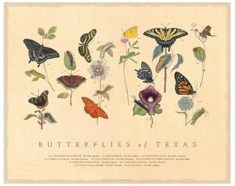 Butterflies of Texas Fine Art Botanical Poster