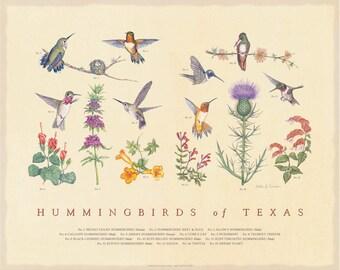 Hummingbirds of Texas Fine Art Botanical poster
