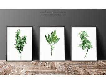 Thyme Watercolor Painting, Sage Art Print, Basil Herb Kitchen Decor Green Wall Illustration, Set 3 different Herbs Medicinal Plants Chart