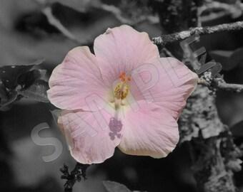 Oahu Flower 2, Instant Download