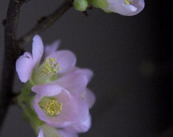 Spring Bud #20