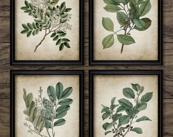 Green Plant Print Set of 4 - Vintage Leaves Botanical Art Decor - Green Digital Printable Art - Set Of Four Prints #676 - INSTANT DOWNLOAD