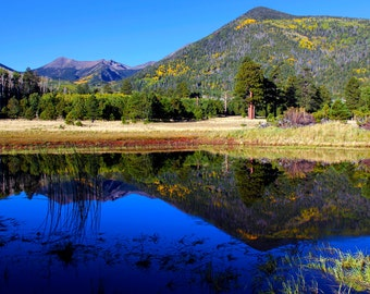 Mirror Image~Reflections of Locket Meadow