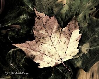 The Autumn Leaf ~ More Color