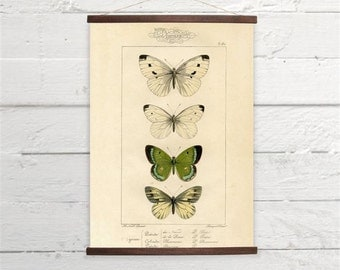 Beautiful Vintage Green White Butterflies Natural History Canvas Poster Print Wooden  Wall Chart Size A3 16x11