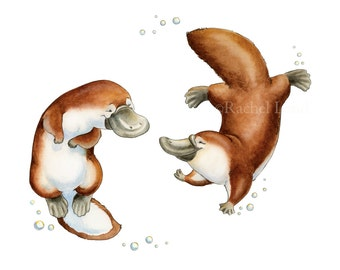 Watercolor Nursery Art. A Platypi Pair - Platypus Giclee Print, Original Artwork, Children's illustration, Nursery Wall Art