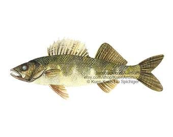 Walleye Art Print & Original, Freshwater River Fish, Watercolor Painting Fish Scientific Illustration Drawing, Home Wall Decor Fishing Gift