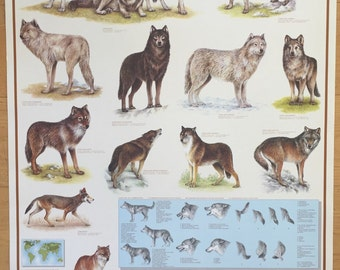 Hobby Poster Chart Wolf  Wolves Of The World  Poster 27 x 39 made in Italy