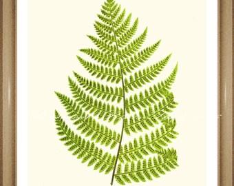 """Botanical Print. Fern #39. Foliage Print. Aspidium Fern Print. 5x7"""" 8x10"""" 11x14"""""""