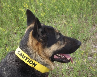 "1.5"" Canine Caution Strap Canary Yellow"